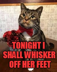 Boris, ready to make magic happen! |  TONIGHT I SHALL WHISKER  OFF HER FEET | image tagged in cat handsome,nixieknox,cats,memes,funny | made w/ Imgflip meme maker