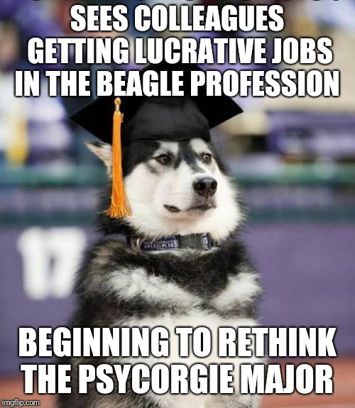 Graduate Dog | SEES COLLEAGUES GETTING LUCRATIVE JOBS IN THE BEAGLE PROFESSION BEGINNING TO RETHINK THE PSYCORGIE MAJOR | image tagged in graduate dog | made w/ Imgflip meme maker