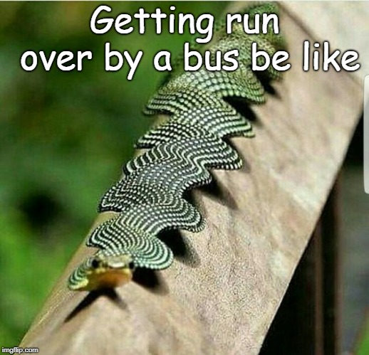 I don't even know what this is | Getting run over by a bus be like | image tagged in insect,insects,bus,i don't know,what is this,idk | made w/ Imgflip meme maker
