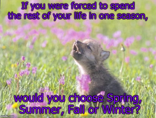 Baby Insanity Wolf Meme | If you were forced to spend the rest of your life in one season, would you choose Spring, Summer, Fall or Winter? | image tagged in memes,baby insanity wolf | made w/ Imgflip meme maker