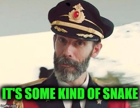 Captain Obvious | IT'S SOME KIND OF SNAKE | image tagged in captain obvious | made w/ Imgflip meme maker