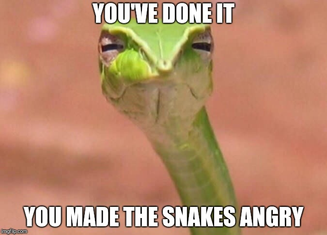 Skeptical snake | YOU'VE DONE IT YOU MADE THE SNAKES ANGRY | image tagged in skeptical snake | made w/ Imgflip meme maker