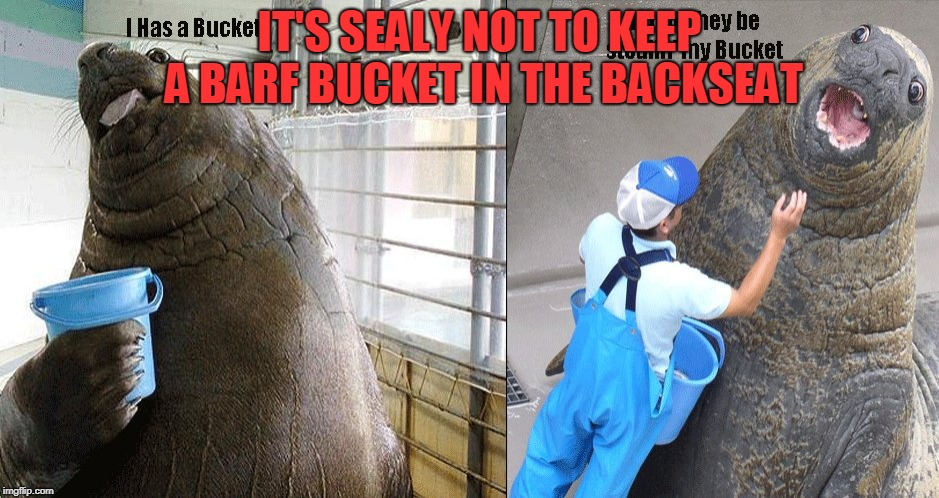 I Has A Bucket | IT'S SEALY NOT TO KEEP A BARF BUCKET IN THE BACKSEAT | image tagged in i has a bucket | made w/ Imgflip meme maker