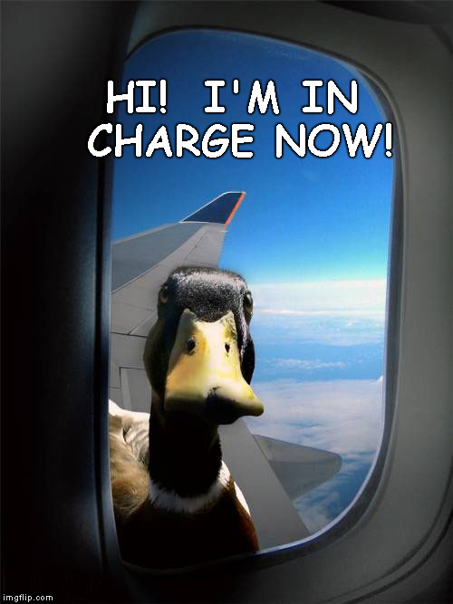 Duck Plane Window | HI!  I'M IN CHARGE NOW! | image tagged in duck plane window | made w/ Imgflip meme maker