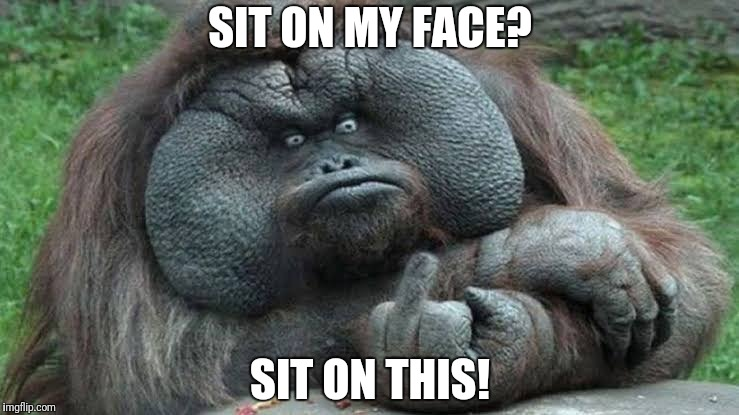 Sit on my face? | SIT ON MY FACE? SIT ON THIS! | image tagged in funny monkey,flat face,sit on this | made w/ Imgflip meme maker