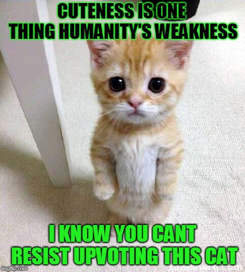 Humanity's Weakness | CUTENESS IS ONE THING HUMANITY'S WEAKNESS I KNOW YOU CANT RESIST UPVOTING THIS CAT | image tagged in memes,cute cat,cuteness | made w/ Imgflip meme maker
