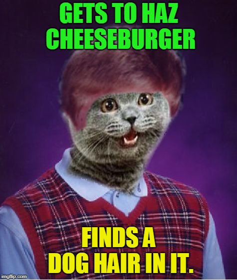 I haz Bad Luck | GETS TO HAZ CHEESEBURGER FINDS A DOG HAIR IN IT. | image tagged in i haz bad luck,nixieknox,memes,cats | made w/ Imgflip meme maker