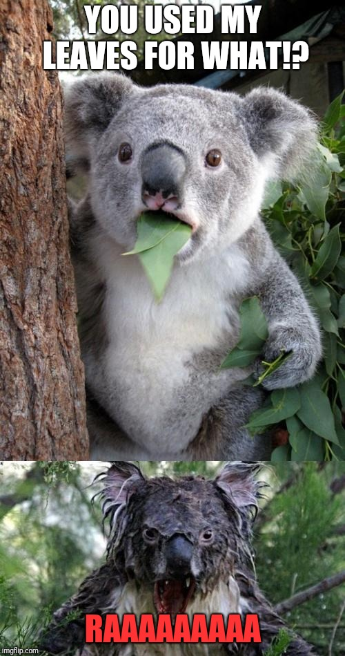 YOU USED MY LEAVES FOR WHAT!? RAAAAAAAAA | image tagged in memes,surprised koala,angry koala | made w/ Imgflip meme maker