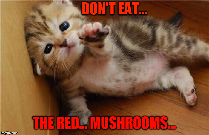 DON'T EAT... THE RED... MUSHROOMS... | made w/ Imgflip meme maker