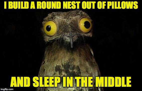 Weird Stuff I Do Potoo | I BUILD A ROUND NEST OUT OF PILLOWS AND SLEEP IN THE MIDDLE | image tagged in memes,weird stuff i do potoo,AdviceAnimals | made w/ Imgflip meme maker