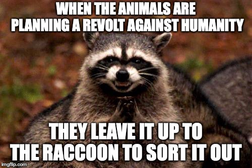 Evil Plotting Raccoon | WHEN THE ANIMALS ARE PLANNING A REVOLT AGAINST HUMANITY THEY LEAVE IT UP TO THE RACCOON TO SORT IT OUT | image tagged in memes,evil plotting raccoon | made w/ Imgflip meme maker