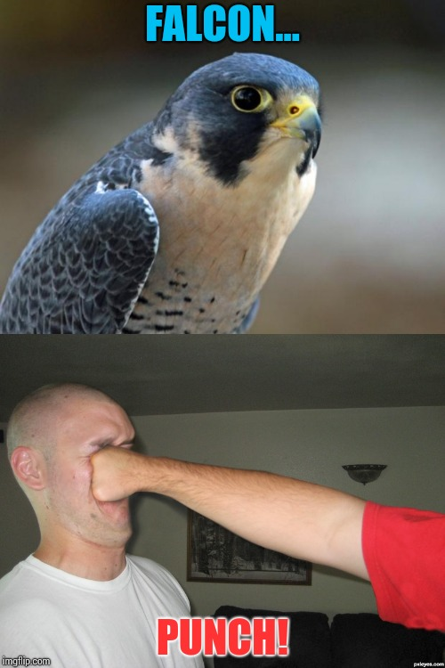 FALCON... PUNCH! | image tagged in blue falcon,face punch,falcon punch,falcon punch em in da face | made w/ Imgflip meme maker