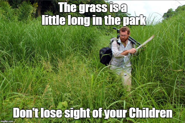 Long Grass in the Park | The grass is a little long in the park Don't lose sight of your Children | image tagged in grass | made w/ Imgflip meme maker