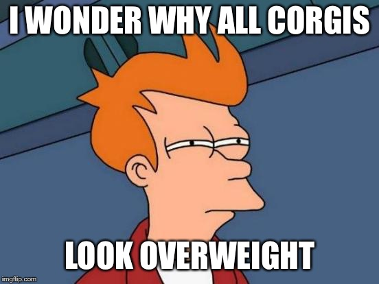 Futurama Fry Meme | I WONDER WHY ALL CORGIS LOOK OVERWEIGHT | image tagged in memes,futurama fry | made w/ Imgflip meme maker
