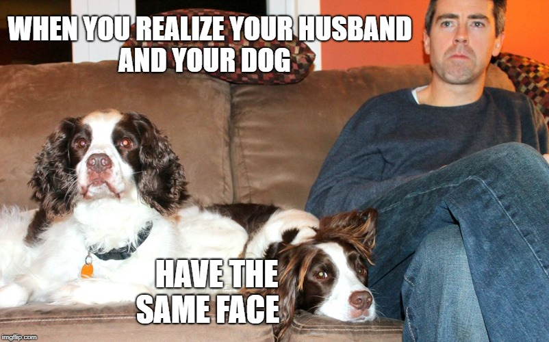 When you husband looks like your dog | WHEN YOU REALIZE YOUR HUSBAND               AND YOUR DOG HAVE THE                  SAME FACE | image tagged in funny dog,husband,funny dog memes | made w/ Imgflip meme maker