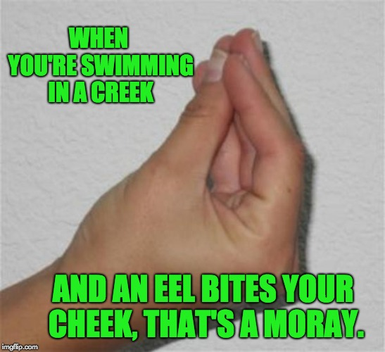 italian gesture | WHEN YOU'RE SWIMMING IN A CREEK AND AN EEL BITES YOUR CHEEK, THAT'S A MORAY. | image tagged in italian gesture | made w/ Imgflip meme maker