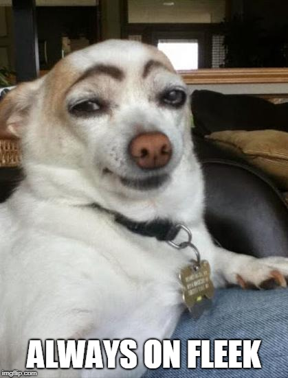 dog eyebrows | ALWAYS ON FLEEK | image tagged in dog eyebrows | made w/ Imgflip meme maker