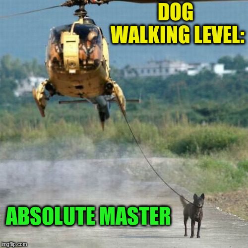 Lazy Millionaire Quarterly | DOG WALKING LEVEL: ABSOLUTE MASTER | image tagged in memes,dog walking,helicopter | made w/ Imgflip meme maker