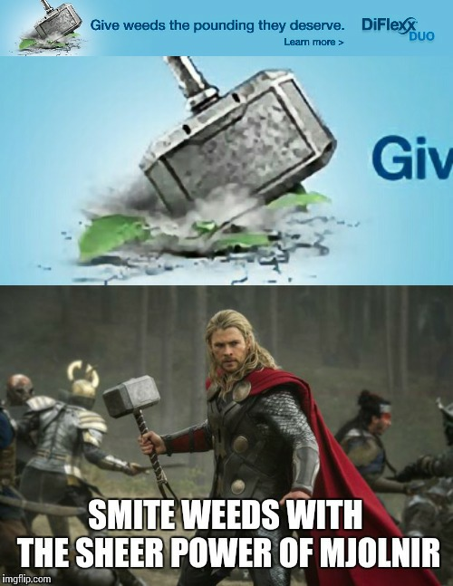 I actually saw this ad on Imgflip | image tagged in thor,mjolnir,advertisement | made w/ Imgflip meme maker