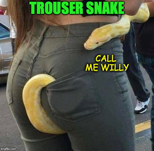 Someone got a wrap-around | TROUSER SNAKE CALL ME WILLY | image tagged in snake puns,funny animals | made w/ Imgflip meme maker