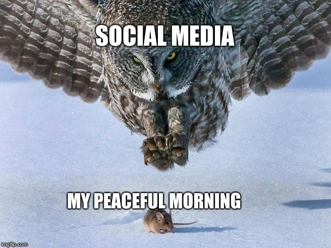 can we make this a template? | SOCIAL MEDIA MY PEACEFUL MORNING | image tagged in life,owl,mouse | made w/ Imgflip meme maker