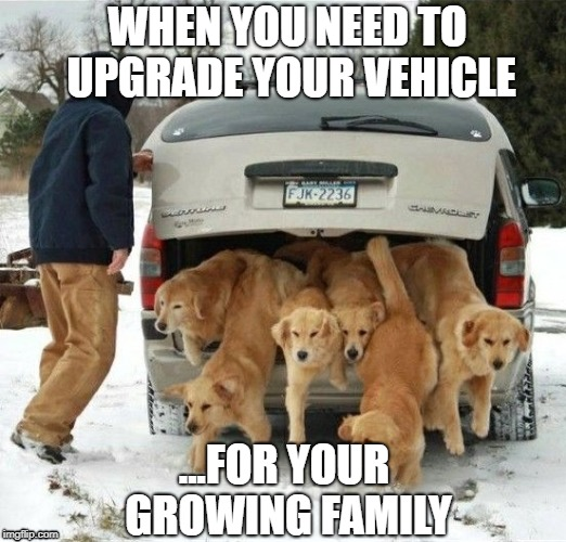 dog family | WHEN YOU NEED TO UPGRADE YOUR VEHICLE ...FOR YOUR GROWING FAMILY | image tagged in funny,memes,puppies,upgrade,car | made w/ Imgflip meme maker