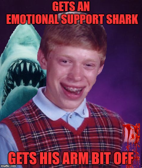 Support animal | GETS AN EMOTIONAL SUPPORT SHARK GETS HIS ARM BIT OFF | image tagged in funny memes,bad luck brian,shark,jaws,brian,support | made w/ Imgflip meme maker