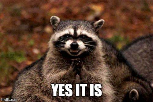 Evil Plotting Raccoon Meme | YES IT IS | image tagged in memes,evil plotting raccoon | made w/ Imgflip meme maker