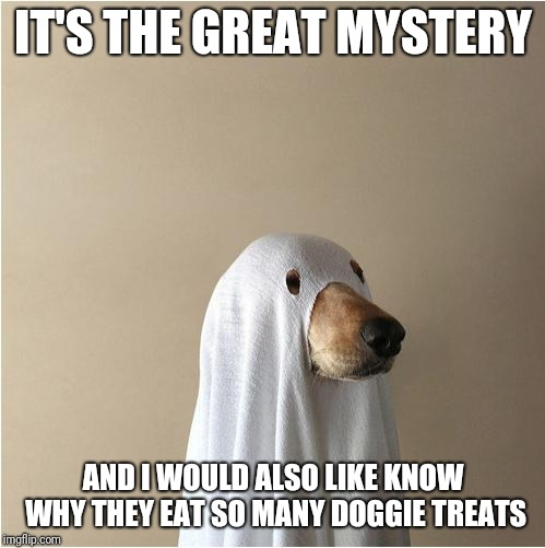 Ghost Doge | IT'S THE GREAT MYSTERY AND I WOULD ALSO LIKE KNOW WHY THEY EAT SO MANY DOGGIE TREATS | image tagged in ghost doge | made w/ Imgflip meme maker