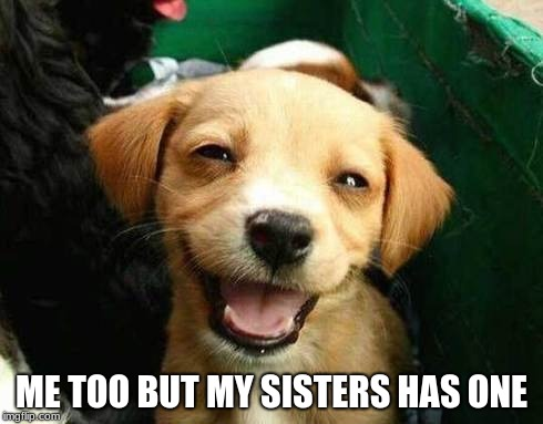 Happy puppy | ME TOO BUT MY SISTERS HAS ONE | image tagged in happy puppy | made w/ Imgflip meme maker