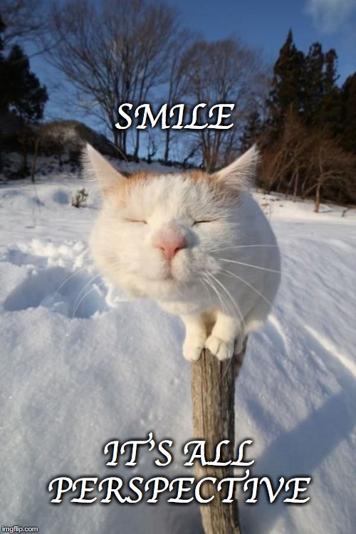 :0) | SMILE IT'S ALL PERSPECTIVE | image tagged in cat,post,smile,all,perspective | made w/ Imgflip meme maker