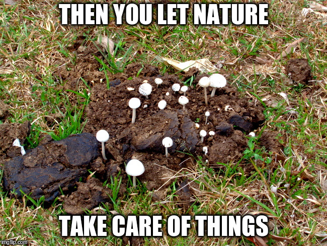 THEN YOU LET NATURE TAKE CARE OF THINGS | made w/ Imgflip meme maker