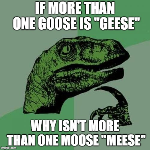 "Philosoraptor Meme | IF MORE THAN ONE GOOSE IS ""GEESE"" WHY ISN'T MORE THAN ONE MOOSE ""MEESE"" 