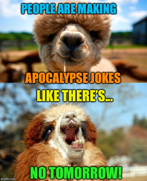 Straight from the alpaca's lips! | PEOPLE ARE MAKING NO TOMORROW! APOCALYPSE JOKES LIKE THERE'S... | image tagged in alpaca,bad puns,funny animals,apocalypse,jokes,funny memes | made w/ Imgflip meme maker