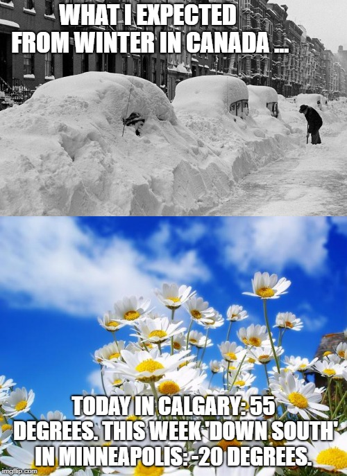WHAT I EXPECTED FROM WINTER IN CANADA ... TODAY IN CALGARY: 55 DEGREES. THIS WEEK 'DOWN SOUTH' IN MINNEAPOLIS: -20 DEGREES. | image tagged in spring daisy flowers,winter | made w/ Imgflip meme maker