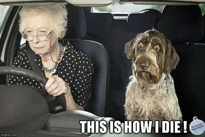 THIS IS HOW I DIE ! | image tagged in memes,dog scared of driving,old lady driving,funny | made w/ Imgflip meme maker