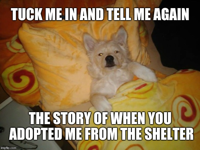 One of the few things I've done right in life is rescuing my dog from the county animal shelter. |  TUCK ME IN AND TELL ME AGAIN; THE STORY OF WHEN YOU ADOPTED ME FROM THE SHELTER | image tagged in sleeping dog,memes,animal rescue,pound,man's best friend,dogs | made w/ Imgflip meme maker