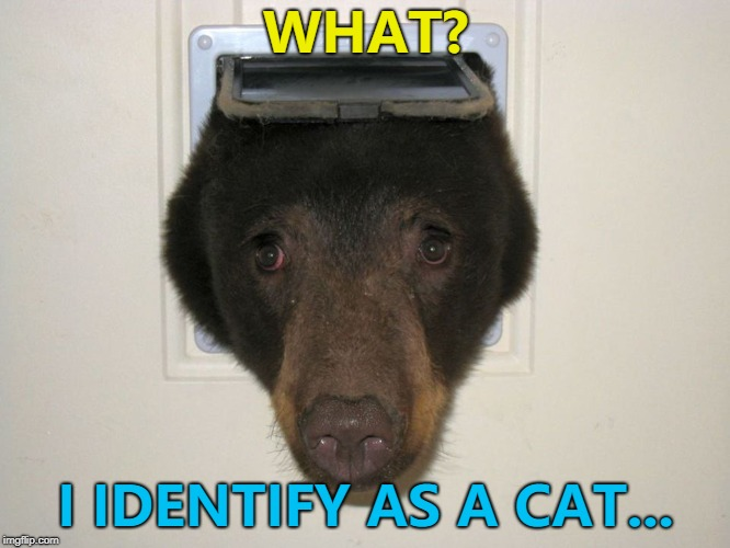 It seemed like a good idea at the time... :) | WHAT? I IDENTIFY AS A CAT... | image tagged in peeking bear,memes,animals,bears | made w/ Imgflip meme maker