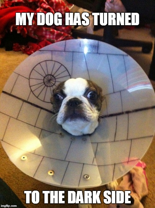 dog star | MY DOG HAS TURNED TO THE DARK SIDE | image tagged in dogs,star wars | made w/ Imgflip meme maker