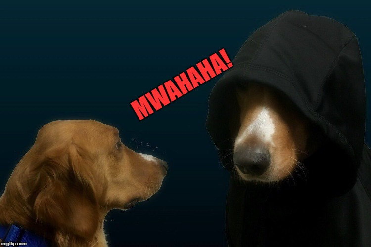 MWAHAHA! | image tagged in evil dog | made w/ Imgflip meme maker
