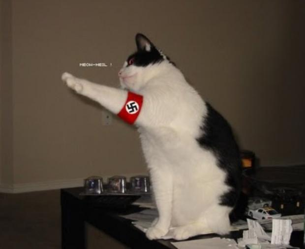 Image result for white cat nazi