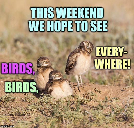 Bird Weekend February 1-3, a moemeobro, Claybourne, and 1forpeace event | EVERY- WHERE! BIRDS, BIRDS, THIS WEEKEND WE HOPE TO SEE | image tagged in memes,bird weekend,what do we want,see,birds,everywhere | made w/ Imgflip meme maker