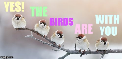 YES! WITH YOU THE BIRDS ARE | made w/ Imgflip meme maker