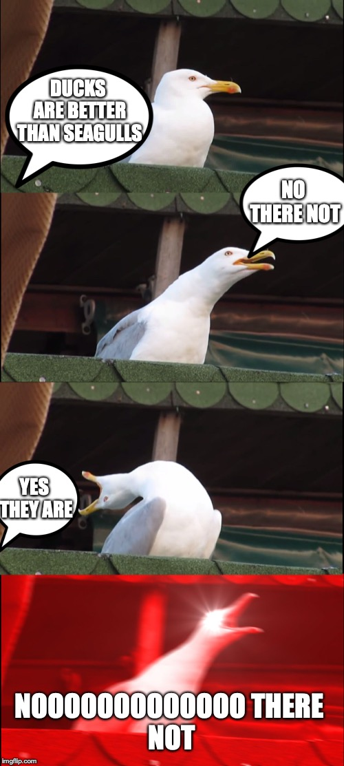 ducks vs seagulls | DUCKS ARE BETTER THAN SEAGULLS NO THERE NOT YES THEY ARE NOOOOOOOOOOOOO THERE NOT | image tagged in memes,inhaling seagull,ducks,vs,seagulls | made w/ Imgflip meme maker