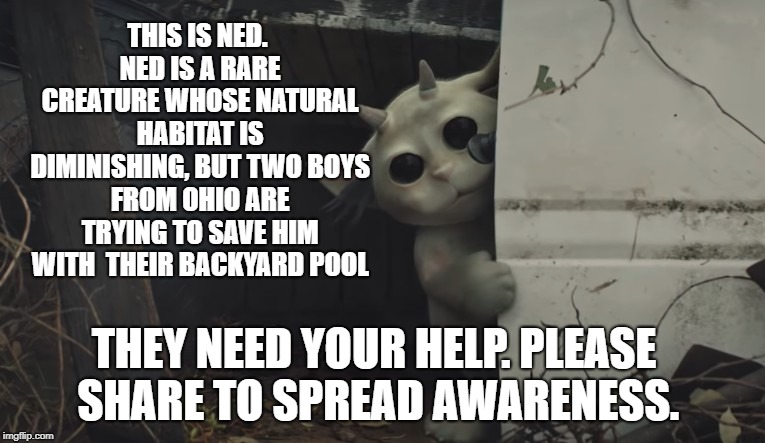 THIS IS NED. NED IS A RARE CREATURE WHOSE NATURAL HABITAT IS DIMINISHING, BUT TWO BOYS FROM OHIO ARE TRYING TO SAVE HIM WITH  THEIR BACKYARD POOL; THEY NEED YOUR HELP. PLEASE SHARE TO SPREAD AWARENESS. | image tagged in twenty one pilots,ned,ned,chlorine | made w/ Imgflip meme maker