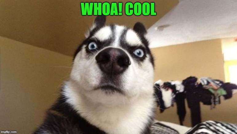 wtf | WHOA! COOL | image tagged in wtf | made w/ Imgflip meme maker