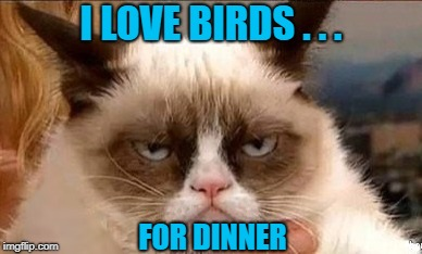 I LOVE BIRDS . . . FOR DINNER | made w/ Imgflip meme maker