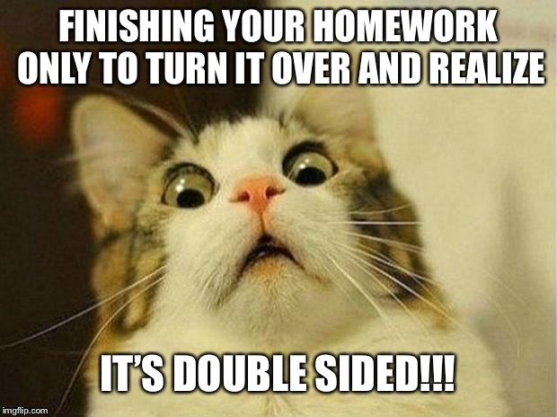 Scared Cat | FINISHING YOUR HOMEWORK ONLY TO TURN IT OVER AND REALIZE IT'S DOUBLE SIDED!!! | image tagged in memes,scared cat | made w/ Imgflip meme maker