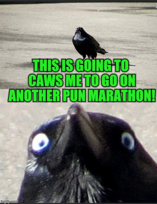 insanity crow | THIS IS GOING TO CAWS ME TO GO ON ANOTHER PUN MARATHON! | image tagged in insanity crow | made w/ Imgflip meme maker
