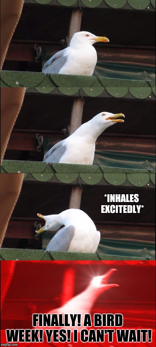 Inhaling Seagull Meme | *INHALES EXCITEDLY* FINALLY! A BIRD WEEK! YES! I CAN'T WAIT! | image tagged in memes,inhaling seagull | made w/ Imgflip meme maker
